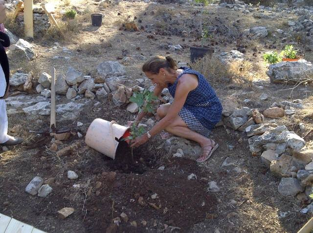 NYS Assemblywoman Amy Paulin plants a tree at Oz v' Gaon in Israel near where the three Israeli boys were murdered. This is going to be developed into a camping and memorial site in their honor.