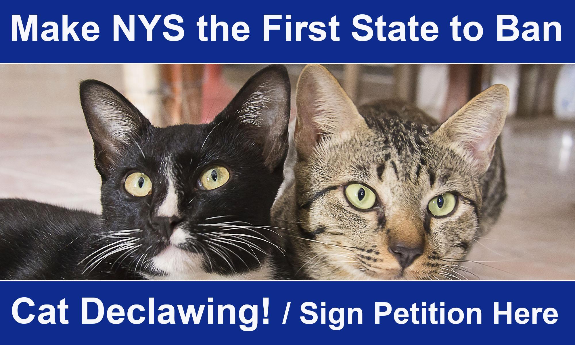 New York State Assembly | Linda B  Rosenthal